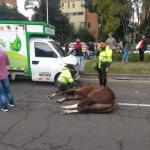Caballo fallecido en accidente de tránsito