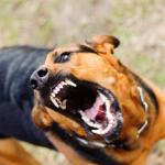Perro enfurecido.