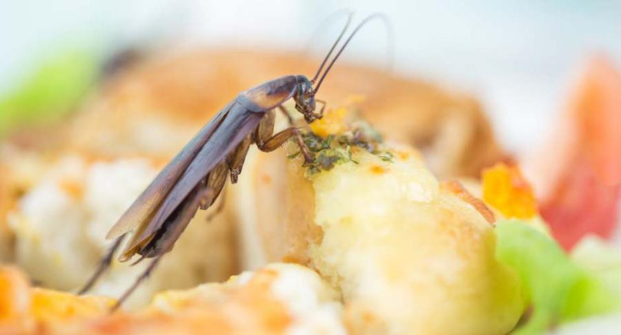 Cucaracha en la comida.