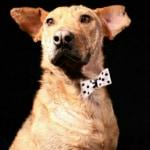 Serafín, perro criollo en adopción