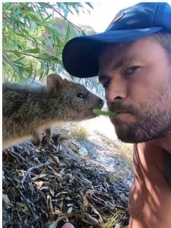 Chris Hemsworth, actor australiano.