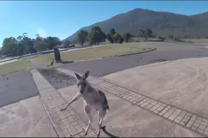 El canguro sorprendió al parapentista