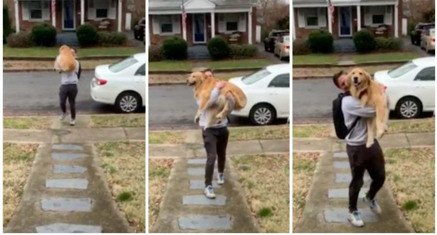 Perro se emociona al ver a su dueño.