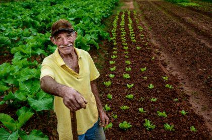campesino cultivando