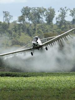 Corte se pronuncia sobre uso de glifosato en Colombia; Consejo de Estupefacientes decidirá