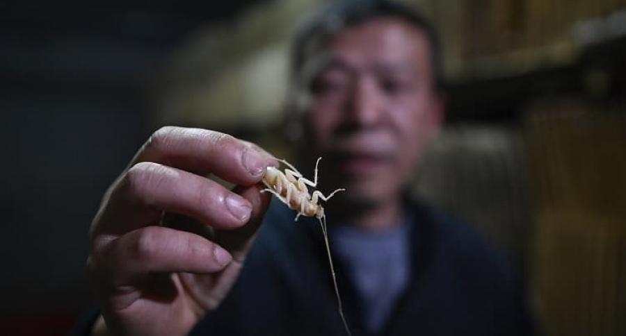 Hombre con cucaracha en la mano
