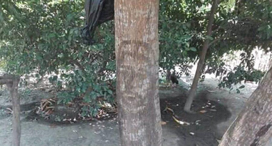 Rostro de Jesús en un árbol