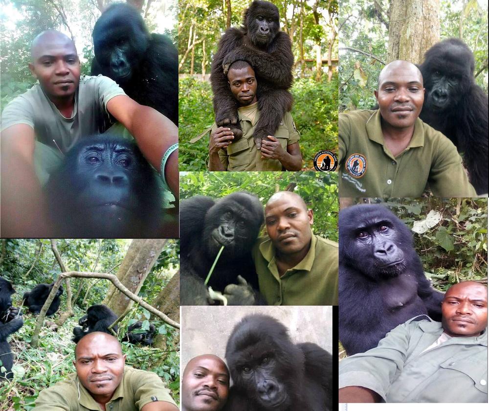 Más selfies de cuidadores con gorilas