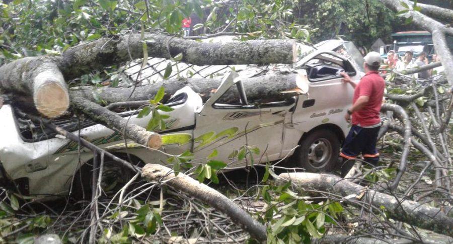 Caída árbol Norte de Santander