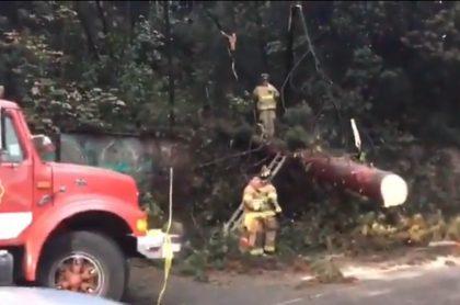 Caída de árbol en la circunvalar