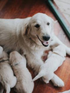 Perra muestra sus habilidades de madre y silencia a sus 7 cachorros de un ladrido