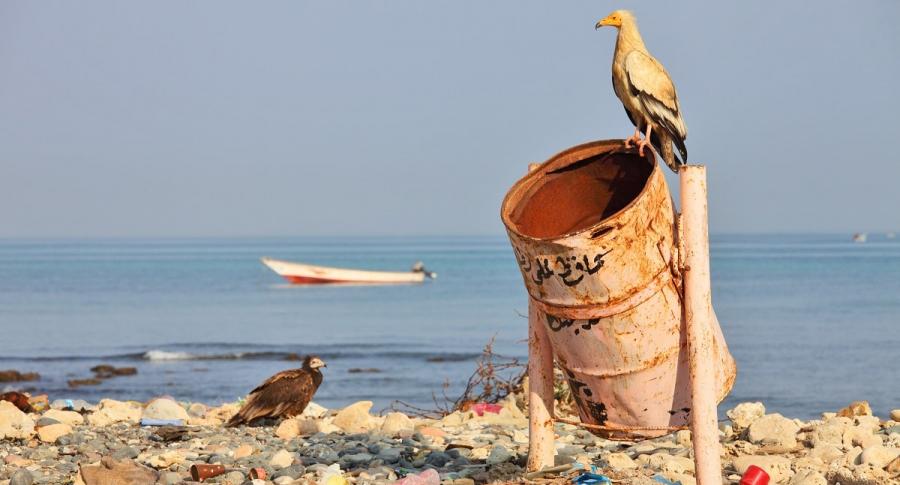 Basura y animales en una playa
