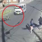 Patrulla de Policía atropella mascota