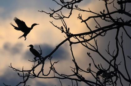 Aves posándose en un árbol