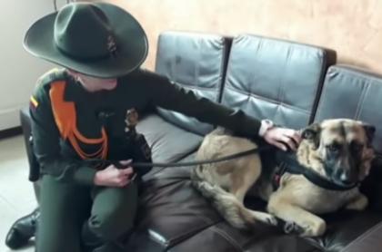 Policía con perra atropellada