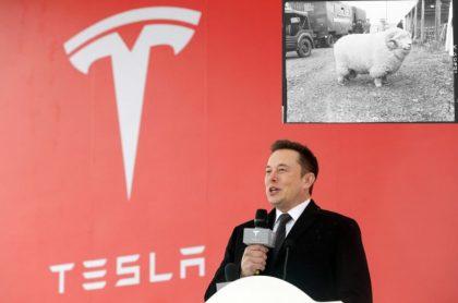 Elon Musk e imagen viralizada en Twitter