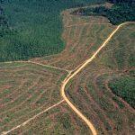 Amazonia brasileña
