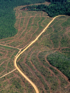 Deforestación en la Amazonía brasileña no para; aumentó más del 80 % en 2019