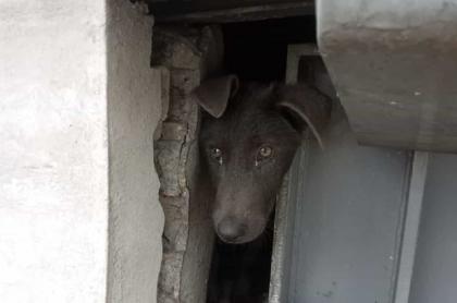 Perro atrapado en estación de Transmilenio. Twitter Paula Casas Ríos