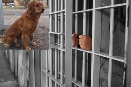 Hombre espera a su dueño, encarcelado.