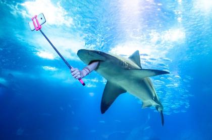 Palo de selfi y tiburones