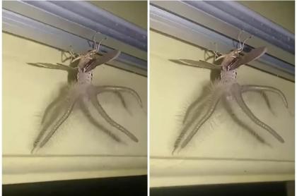 Capto Extrano Insecto Con Alas Y Tentaculos Y Desperto Curiosidad