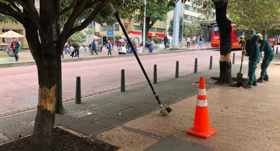 Árboles vandalizados en el centro de Bogotá. Imagen: Twitter-@jbotanicobogota
