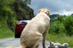 Motociclista se enfrenta a familia que abandonó cruelmente a perro en una carretera