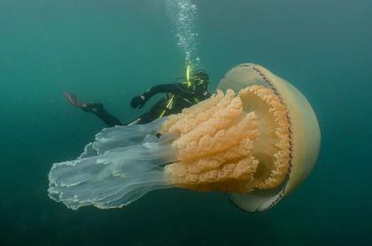 Lizzie Daly junto a medusa barril