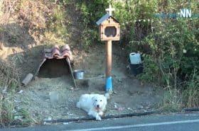 Perro lleva un año y medio esperando a que vuelva su dueño, que murió en accidente
