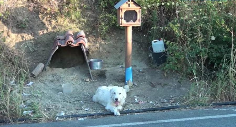 Perro espera a sus dueño.