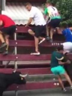 ¡Se salvó de milagro! Joven es atacado violentamente por 2 vacas, en España