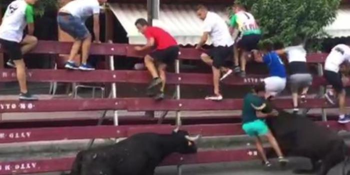 Hombre embestido por unas vacas.