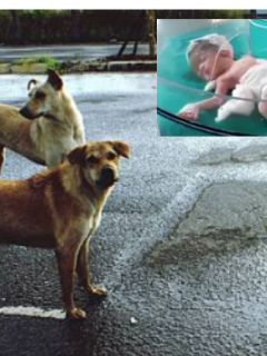 Perros callejeros salvan la vida a bebé que fue cruelmente abandonada en la calle