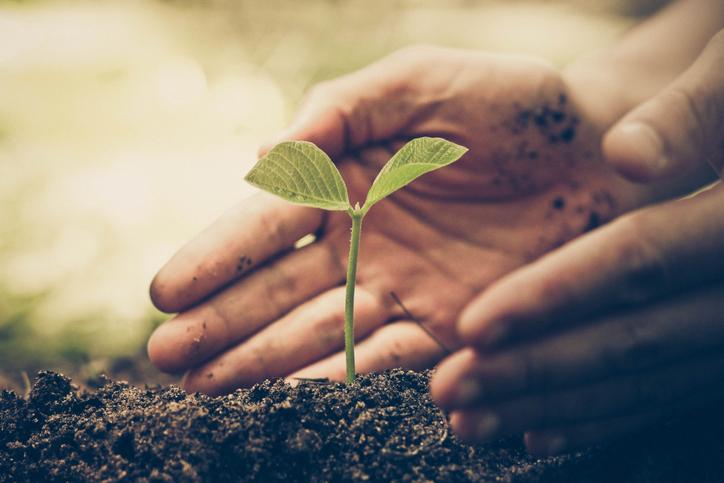 Plantación de árbol