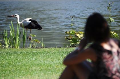 Mujer observando ave
