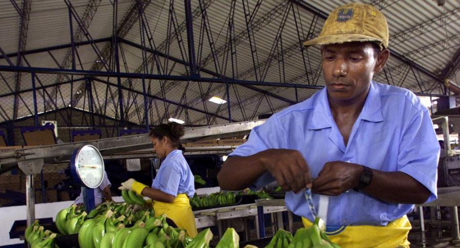 Cultivadores de banano.