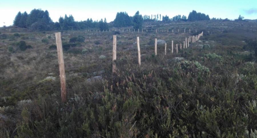 Frailejones destruidos en Boyacá.