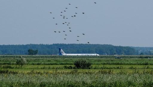 Avión de Ural Airlines que aterrizó de emergencia, en Rusia
