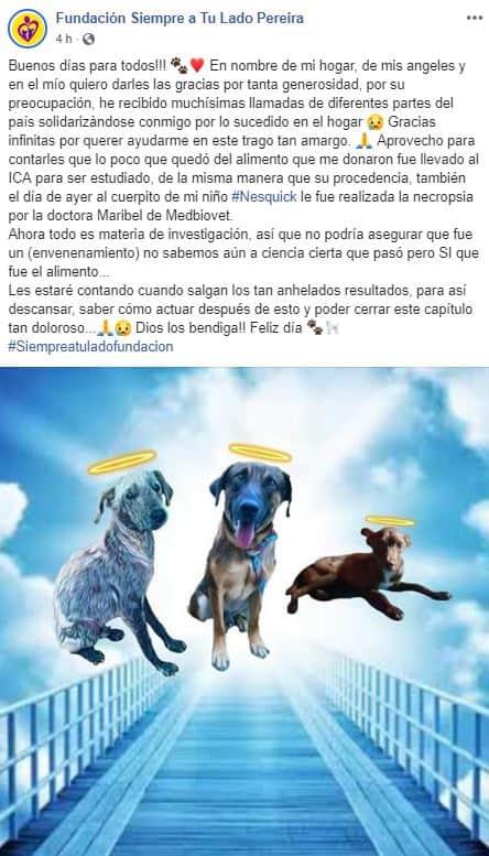 Perros fallecidos por envenenamiento