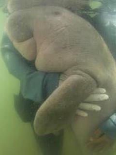 Muere cría de mamífero acuático en vía de extinción luego de ingerir plástico