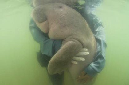 Miriam dugongo