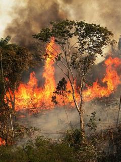 [Video] Así devora el fuego la Amazonia segundo a segundo, mientras el mundo da la espalda