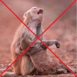 Fotos falsas de la Amazonia