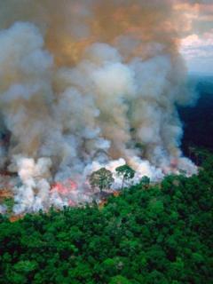 Novia de Yatra, deportistas y hasta presidentes lloran crisis en Amazonia con fotos falsas