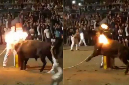 Prende fuego a cuernos de toro
