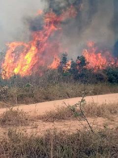 ¿Trump se sensibilizó con incendio en el Amazonas? Ya ofreció apoyo para combatirlo