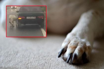 Conductor arrastra a perro.