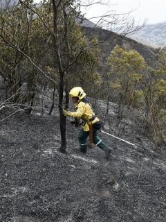 Incendio forestal en Colombia