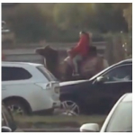 Mujer en un camello